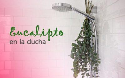 ¿Por qué la gente está colgando eucalipto en la ducha?